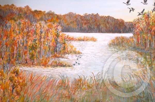 Geese Take Off, James River, VA