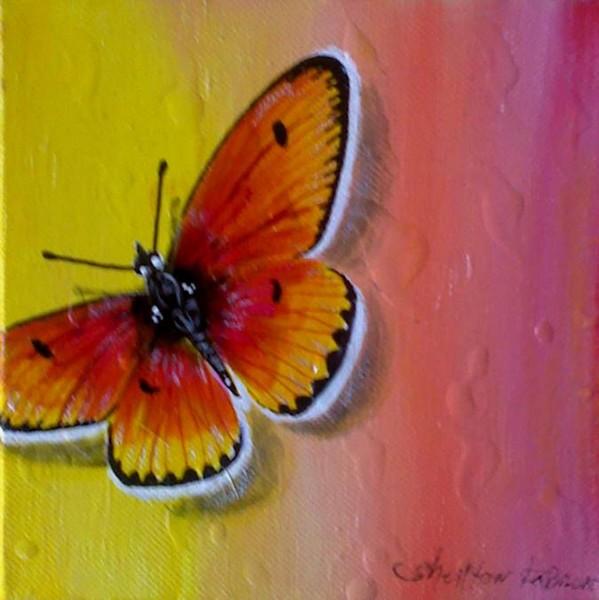 Flutterfly Spectrum