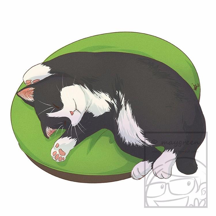 Sleeping Cat Tuxedo Black and White
