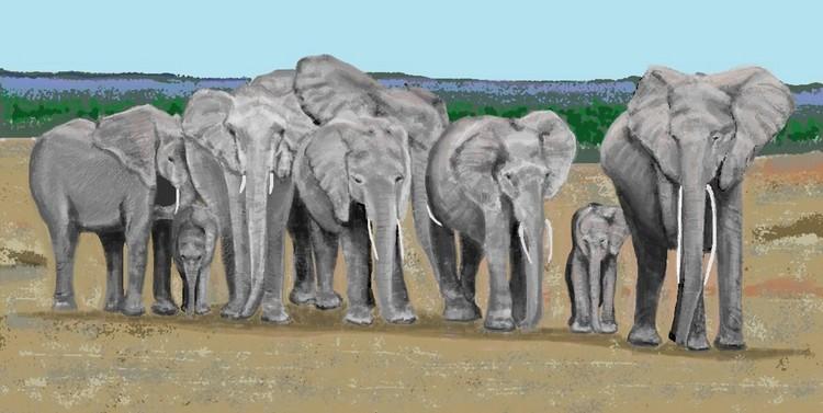 Eight Elephants