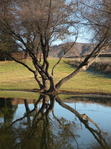 reflection pond study 1 - trees
