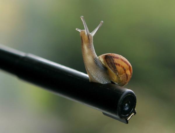 Snail on a Pen