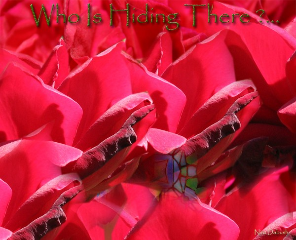 Who is Hiding Between the Roses ? ...