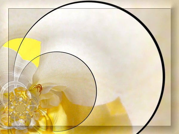 Another Abstract Flower Scene (One)