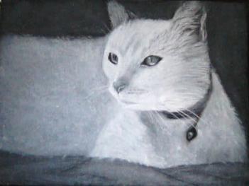 Cat 20