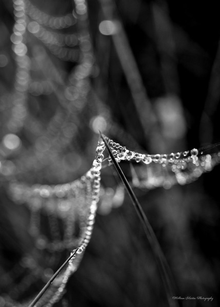 Water Pearls on a Tight Rope