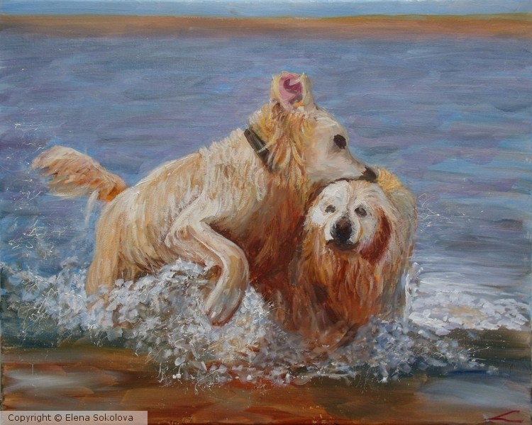 Wet dogs 4