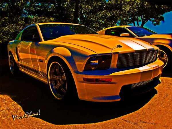 Ford Named My Mustang Shelby