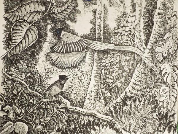 Asian Paradise Flycatchers