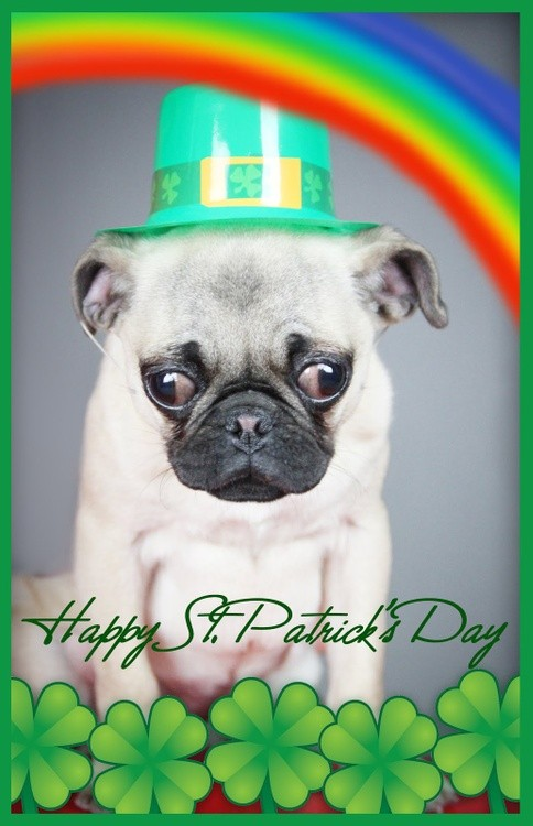 Karen Muro  Happy St. Patrick's day to all of you