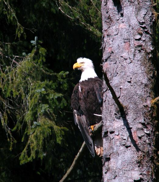 Sunning eagle