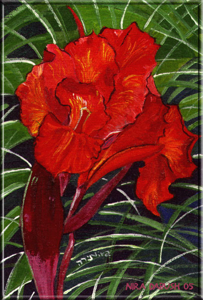 As Red As a Canna