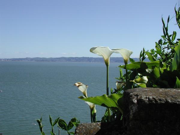 San Francisco Lily's