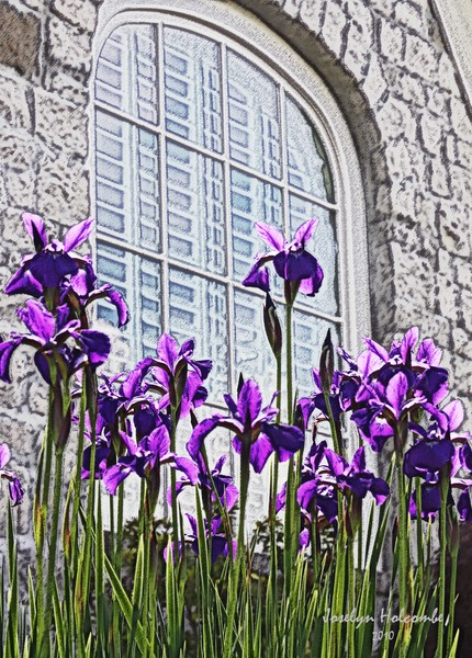 Iris with Window