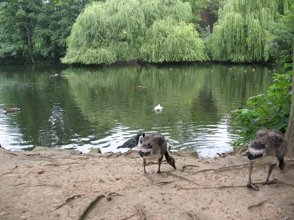 British Pond