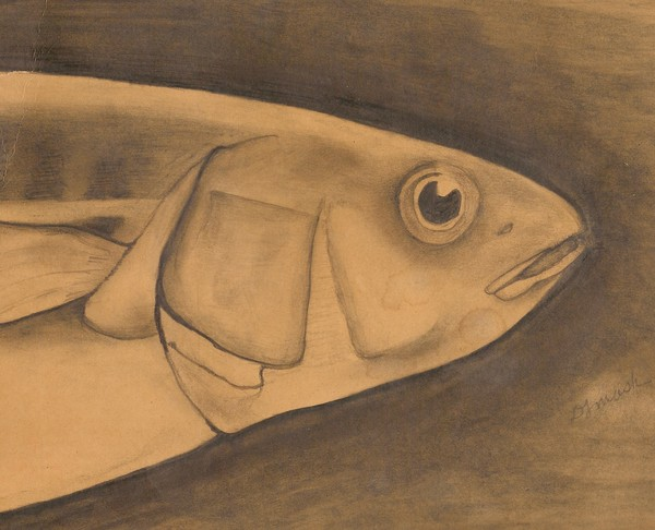 My first Fish Drawing