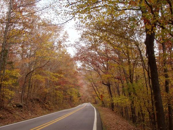 Pig Trail Fall 2008   2