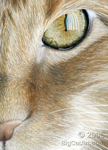 Squeak's Eye