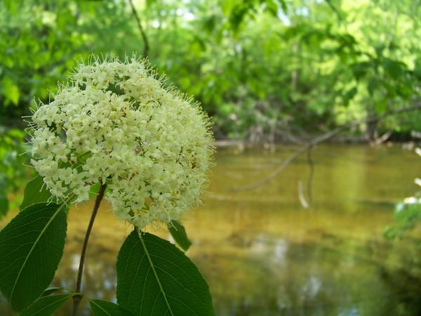 River Wild Flowers