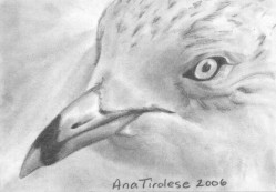 Seagull - ACEO
