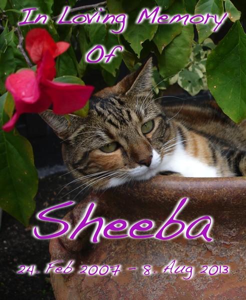 Sheeba Memorial Shirt