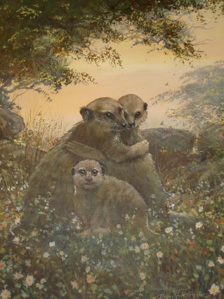 Meerkat Family Love
