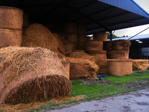 Straw Bales Stack