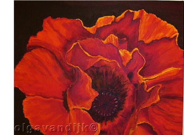 KLAPROOS© (Dutch for Poppy)