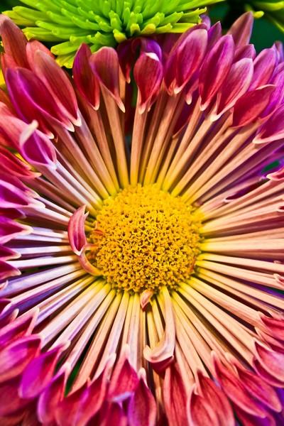 Radiating Blossom