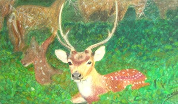 Sri Lanka deer