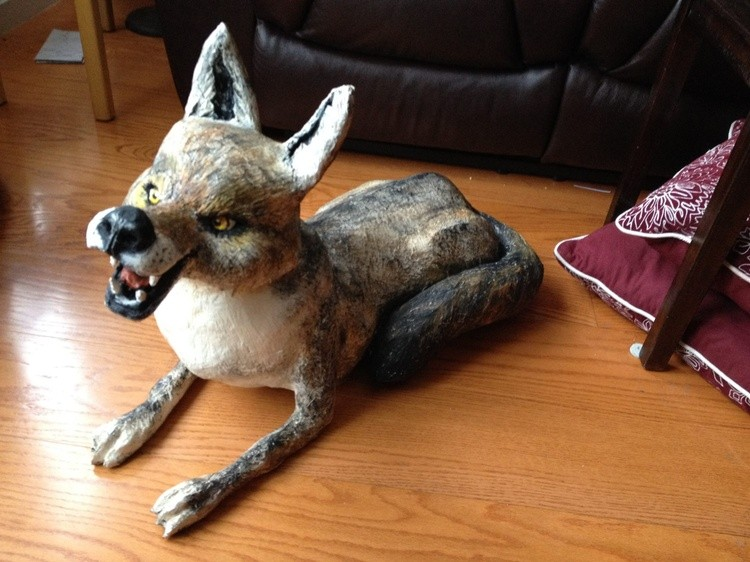 Coyote Right Side