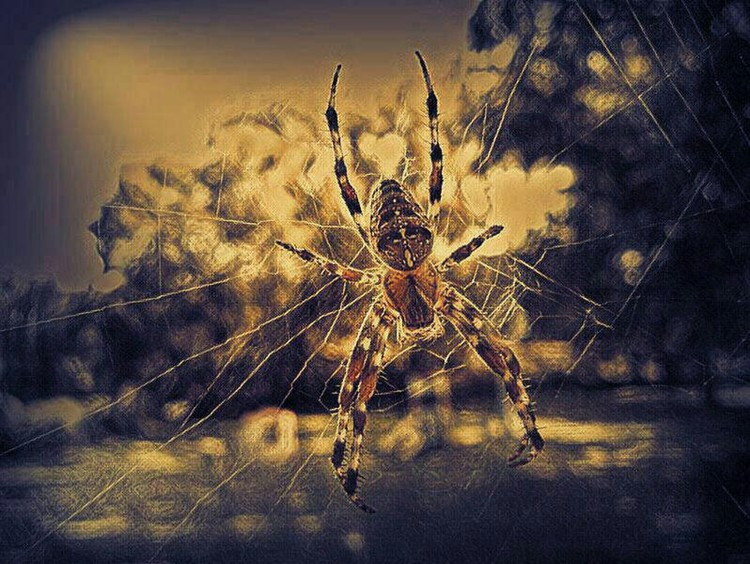 Along Came a Spider 4