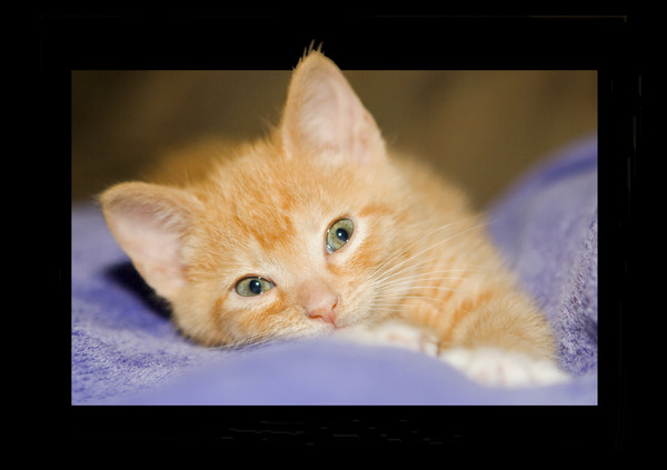 Comfy Kitty