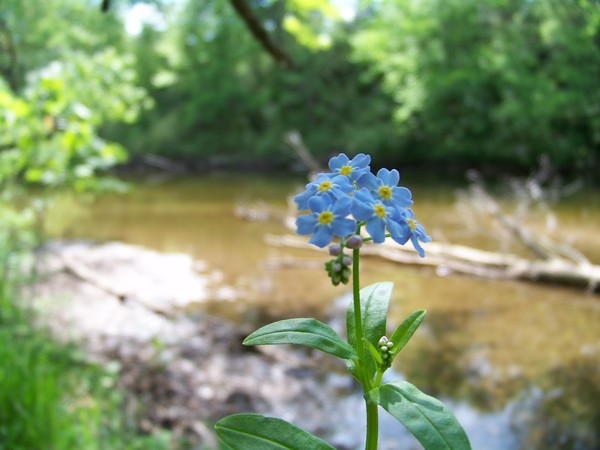 Blue River Flowers