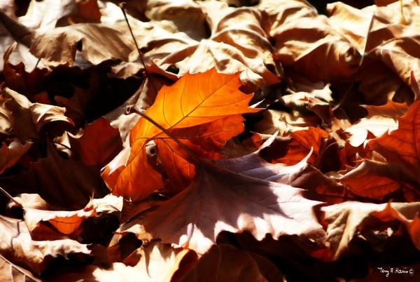 Autumn Leaf Ballet
