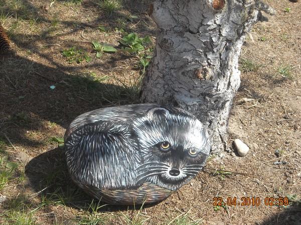 Rock Raccoon