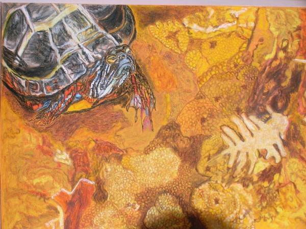 Turtle amongst soft Coral