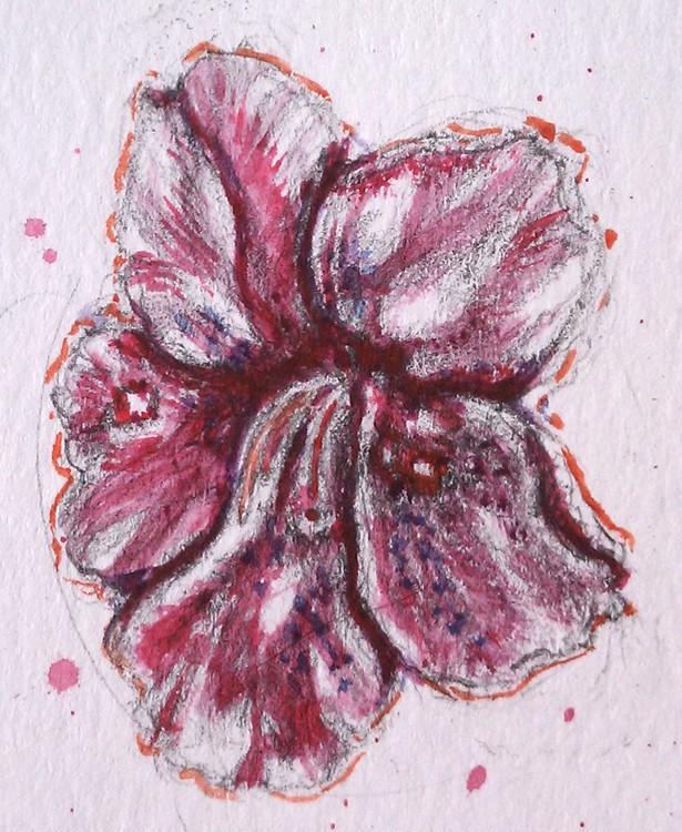 Azalea Watercolor
