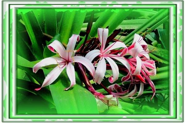 culla delle orchidee