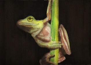 tiny treefrog