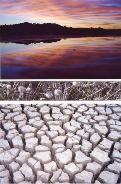 lake - reeds - earth
