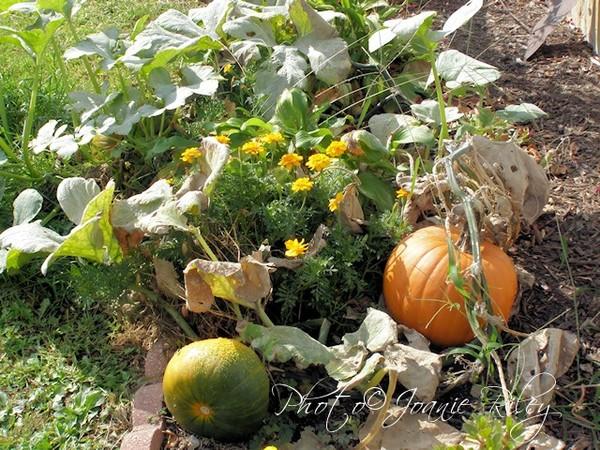 lost pumpkin patch