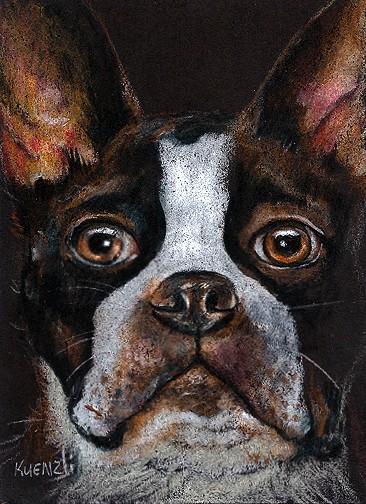 Boston Terrier - Colored Pencil