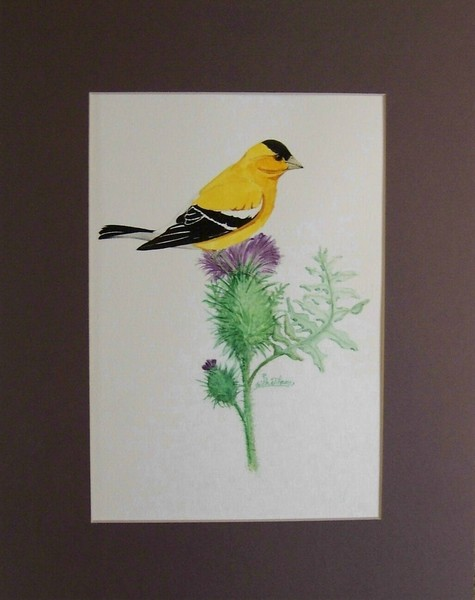 Goldfinch on a Thistle Bloom