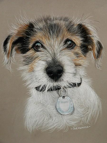 Reggie - JRT puppy
