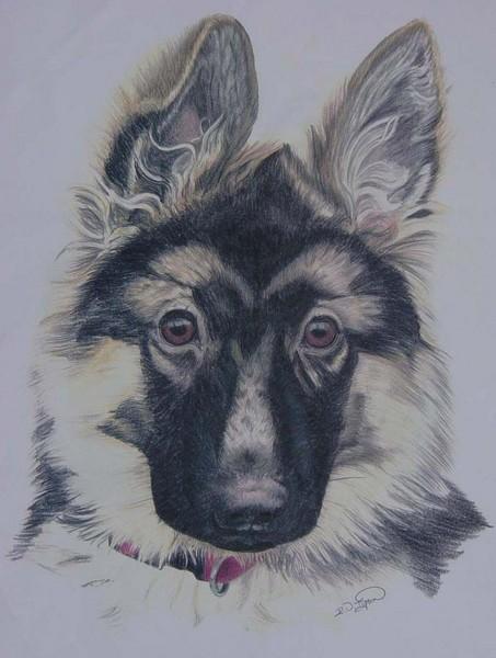German Shepherd Dog Pup