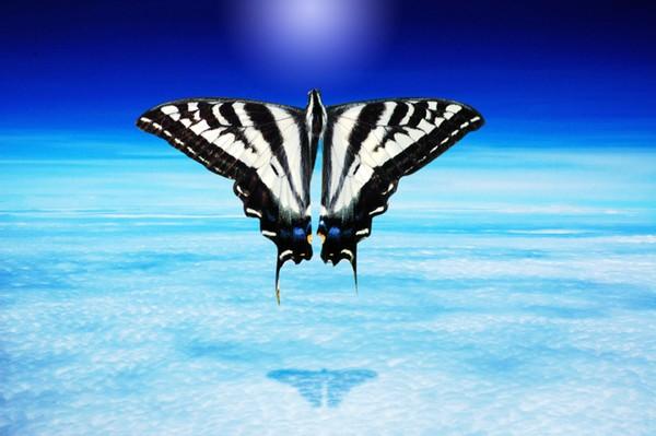 An endless high of butterflies