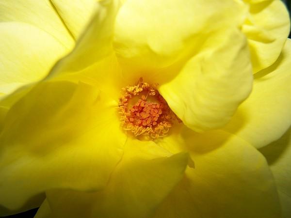 Aroma of nectar