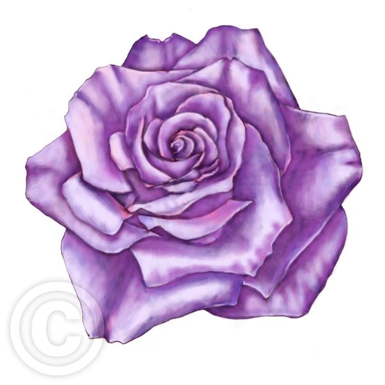 amazing purple rose
