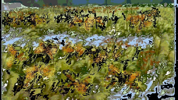 The Butterfly Field